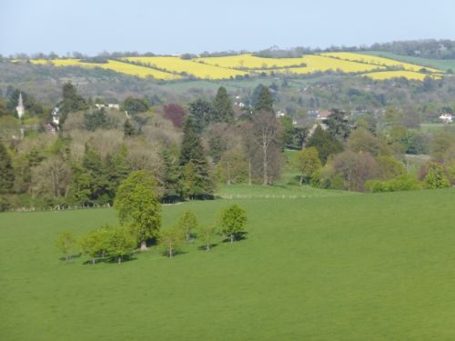 16_201404_15 Gatton Park-Canola Fields_SM